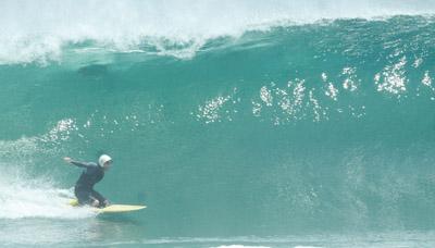 surf 1447 petit